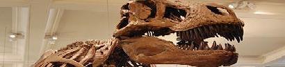 Диносауруси у Светом Писму